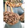Sujetador con collar de conchas y adornos