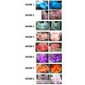Velos de Seda - Colores Mezclados [5 mm] Por Encargo